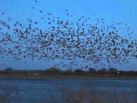 Crane Trust Blind viewing in Alda,Nebraska
