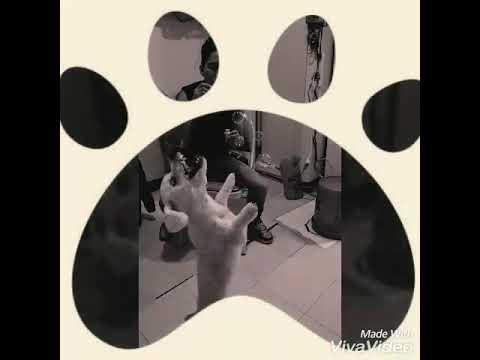 DURA - DOG BUBBLE DANCING 'DADDY YANKEE'