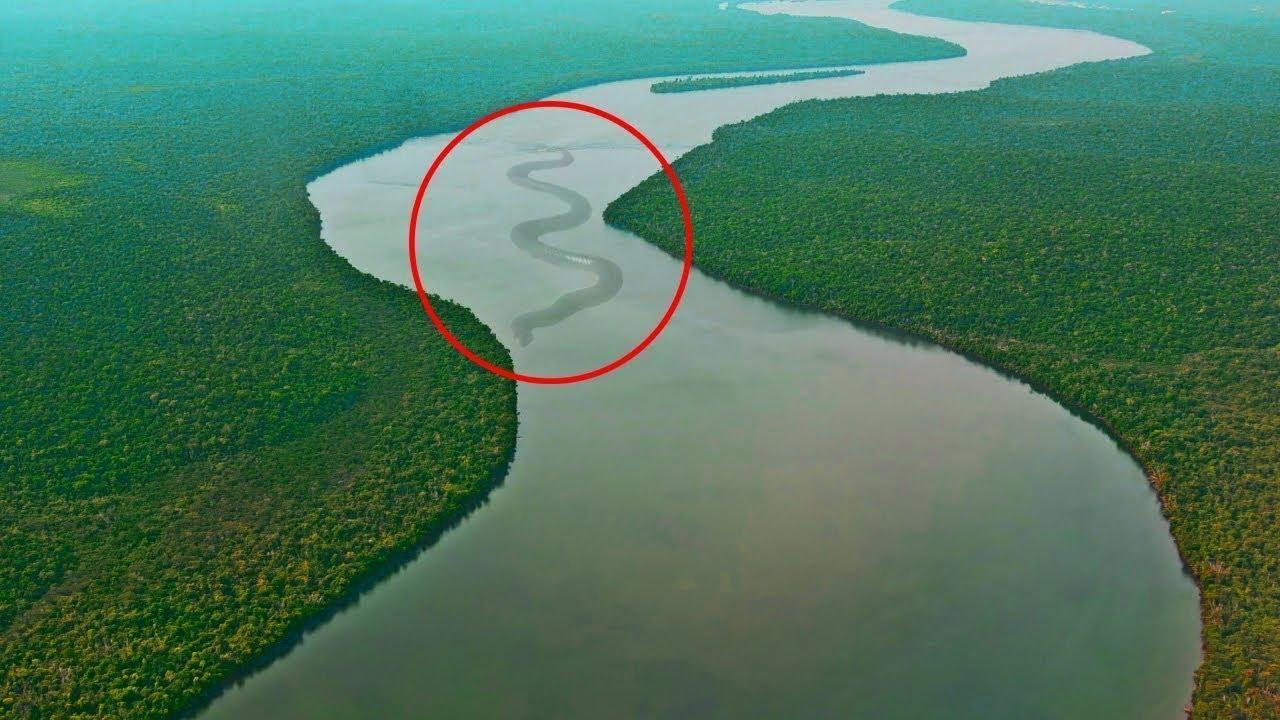 Kalian Berani Kesini 10 Hewan Paling Mengerikan Dan Berbahaya Yang Hanya Ada Di Sungai Amazon Youtube