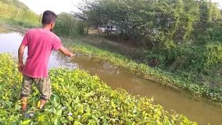 Fish hunting || Fishing for tilapia
