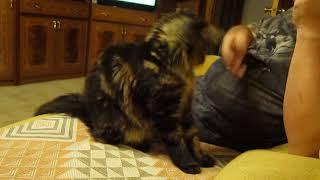Обучение кота.