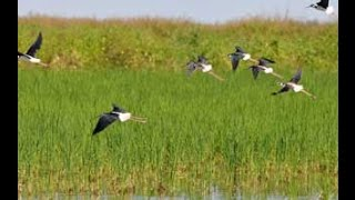 Wildlife for Lunch - Ecosystem function in the Texas Rice Belt - August 2016