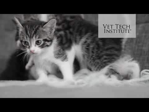 Vet Tech Institute: Shapes and Sizes 2020