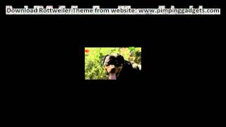 Dogs 101 - Rottweiler + Exclusive  Windows 7 Theme Link