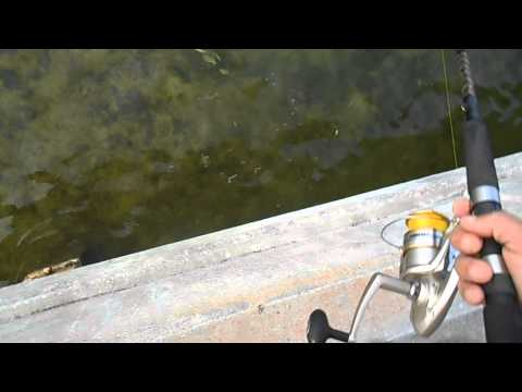 Florida Keys Bridge Fishing- Big Tarpon Throws Hook Twice