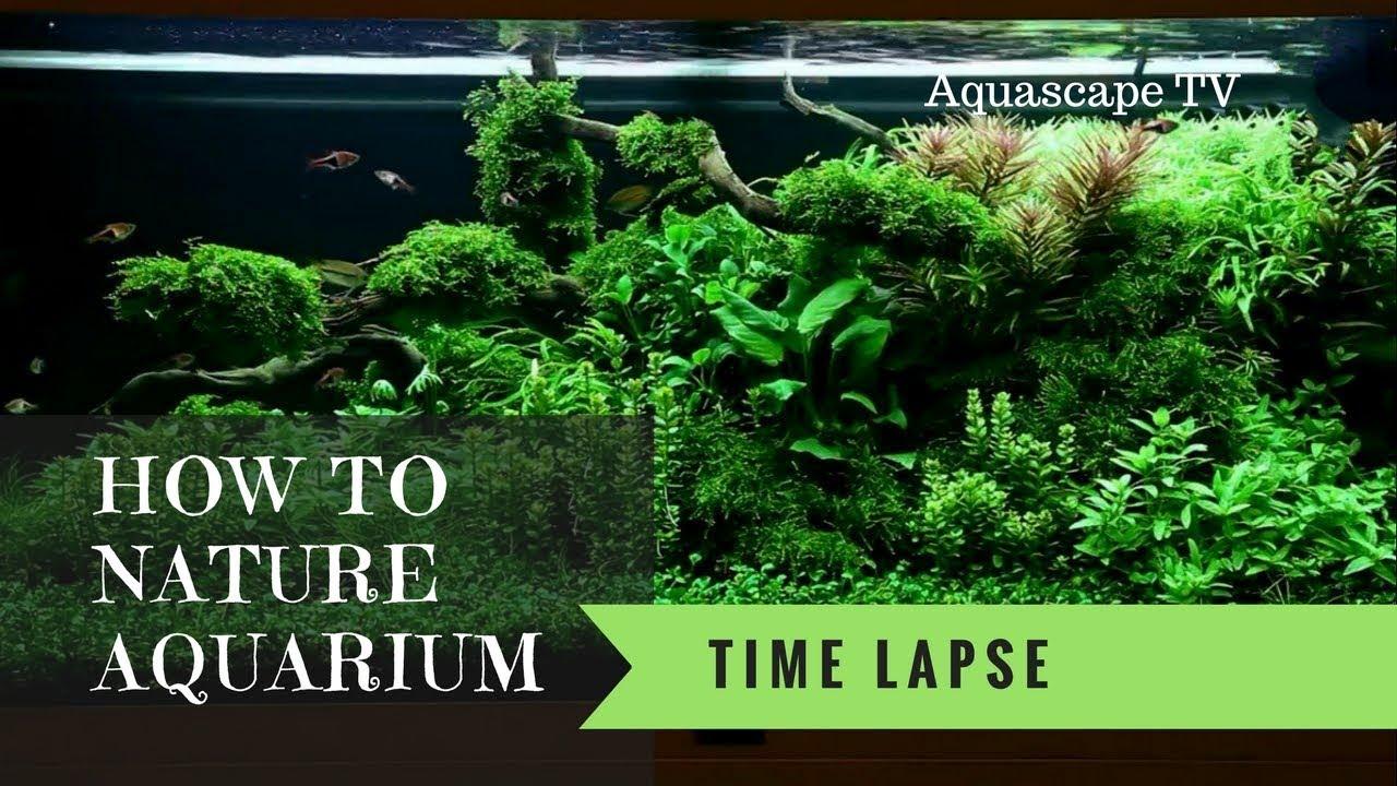 How to Setup Beautiful Nature Aquarium | Aquascape TV ...