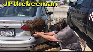 Huge Honey Bee Swarm On Young Lady's Vehicle