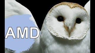 Снежная Сова AMD EPYC против Intel Xeon. XN#87