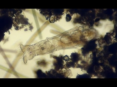 living under a microscope #1 - smooth microorganisms life in a drop of water & ralaxing sound HD