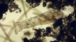 living under a microscope #1 - smooth microcosmos life in a drop of water & ralaxing sound Full HD