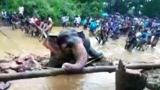 Indian Village Bands Together to Free Trapped Elephant