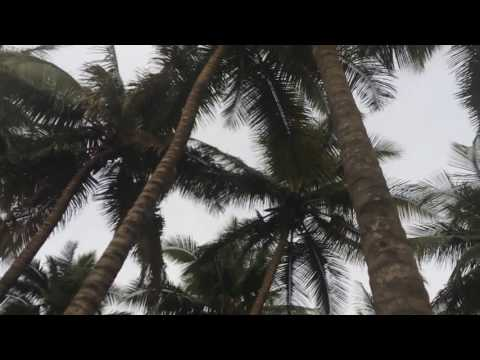 Village backwater Tour to Explore Kerala traditional Agriculture lands, Coconut Plantations