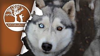 Ep10: Life in South Lappland: Husky Sledding, Ice Fishing, Hunting & Camping