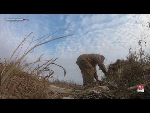 Засидка Шилка в полевых условиях