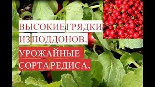 Высокая Грядка из Поддонов. Сорта Редиса. Выращиваем Редис Все Лето!