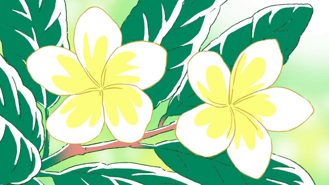 Sketsa Bunga Sketsa Bunga Kamboja