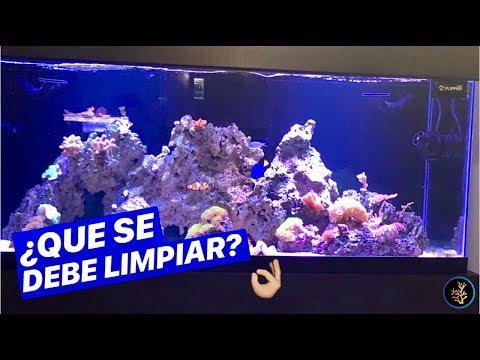 Añadir arena nueva a un acuarioиз YouTube · Длительность: 2 мин48 с