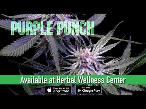 Purple Punch review wJosh