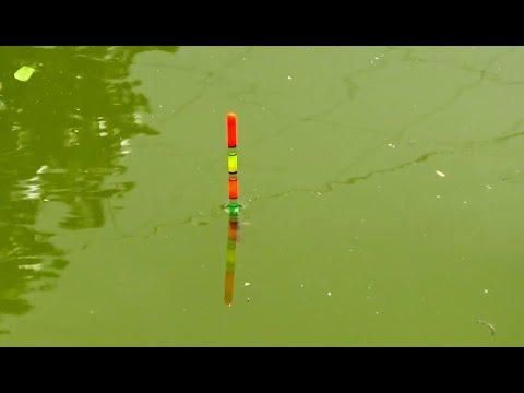 Best Fishing Video