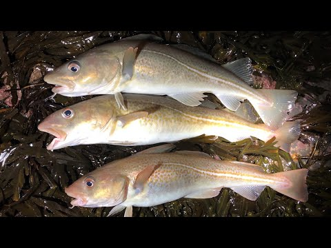 Winter Cod Fishing - Rough Ground Fishing On North East Coast