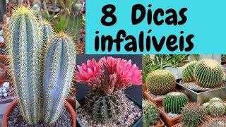 Veja 8 Dicas Para Cultivar Cactos – Dicas Infalíveis