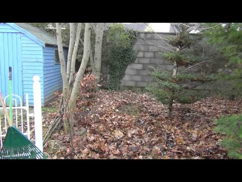Best Rake For Clearing Leaves