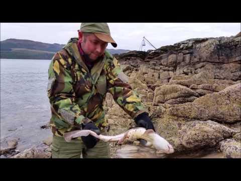 Dog Fish Loch Fyne