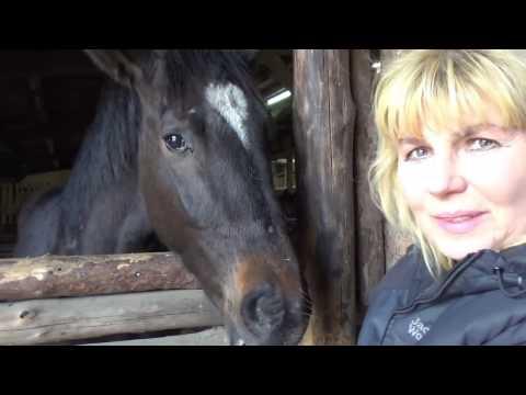 Uratowane konie dziękują za życie Skaryszew 2017