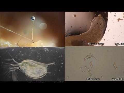 The Amazing Microscopic