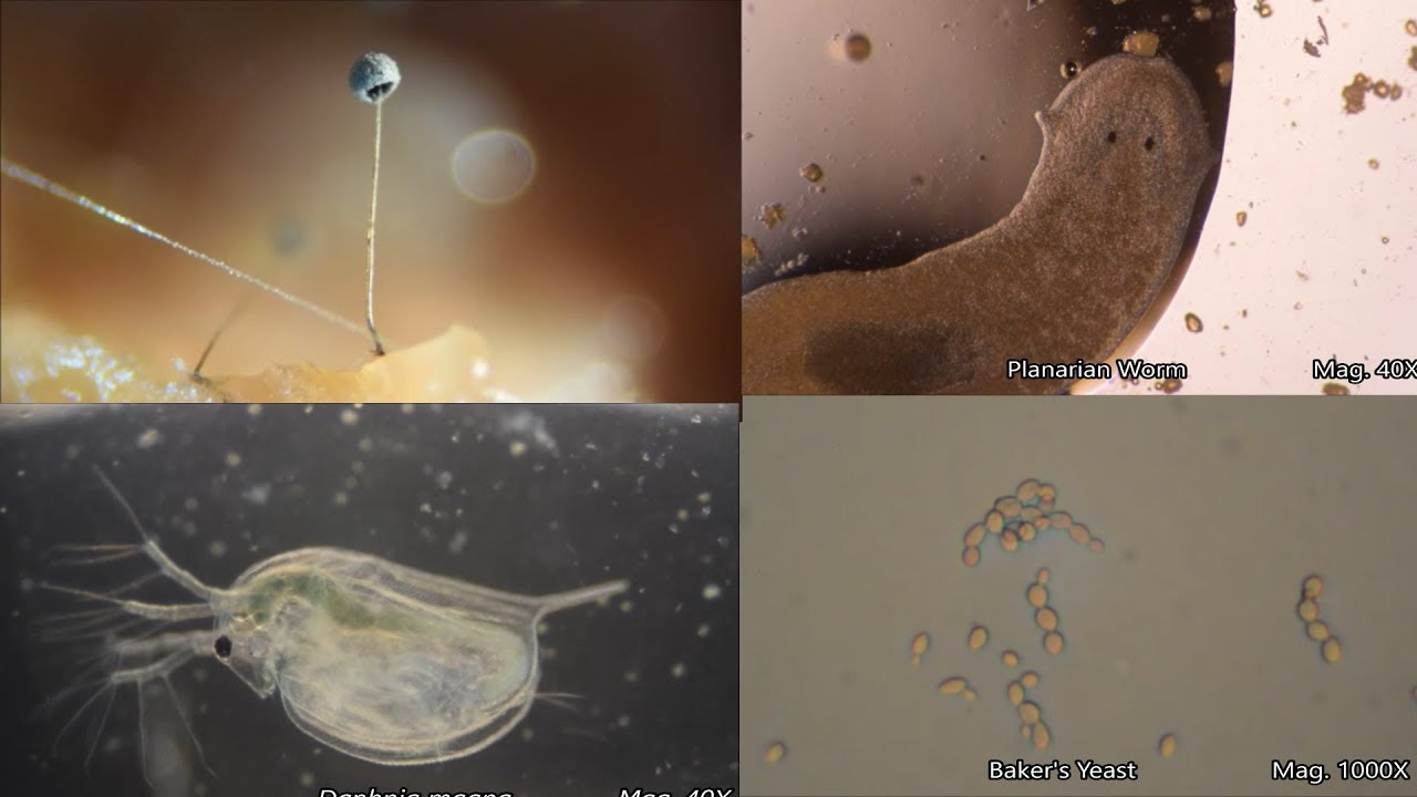 Download The Amazing Microscopic World
