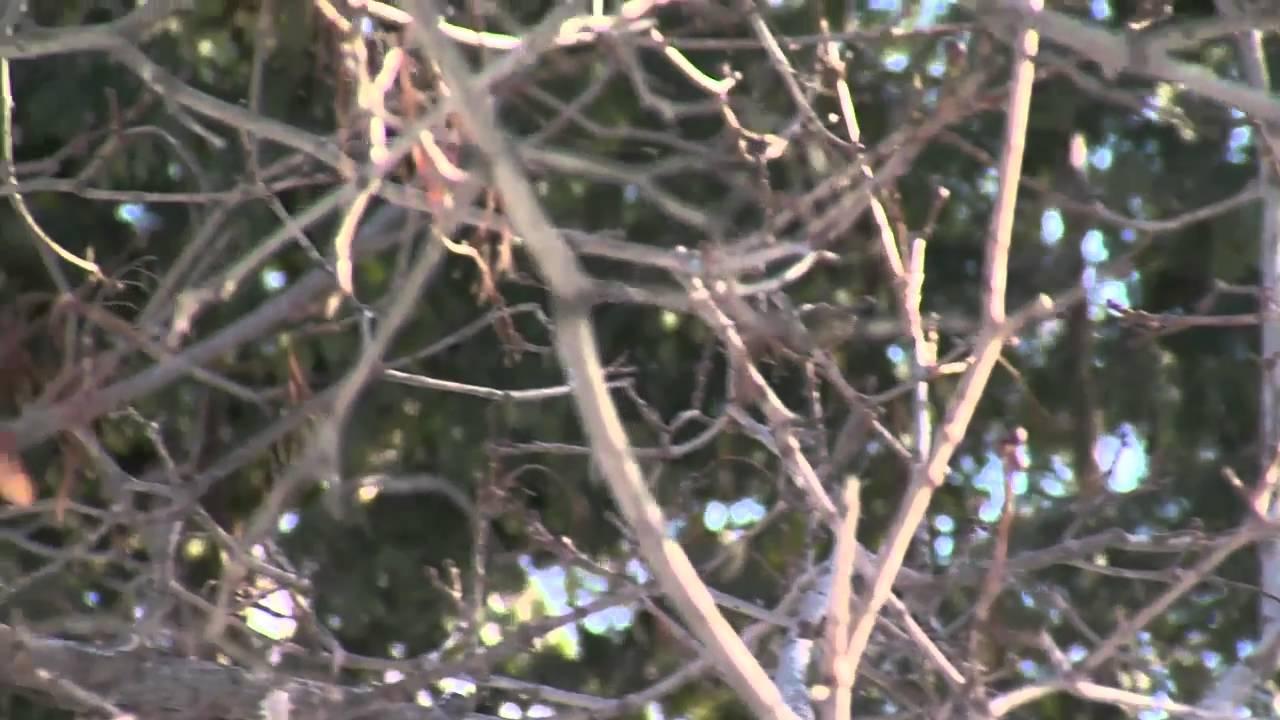 Nourrissage des oiseaux en hiver avec une mangeoire by for Oiseaux des jardins en hiver