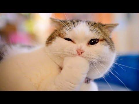 Смешные кошки и животные 2019. Новые приколы с котами, смешные коты приколы 2019 funny animals #83