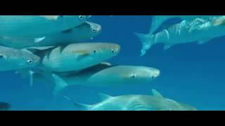 The Perfect Escape to Raffles Seychelles