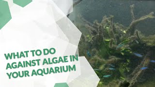 Algenplage im Aquarium bekämpfen  Awesome tips and tricks with Oliver Knott Aquascaping