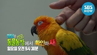 [TV 동물농장] Ep.910 예고
