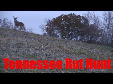 Self Filmed Deer Hunting: Tennessee Rut Hunt