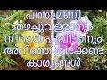 പത്തുമണി ചെടി ,നടീൽ രീതിയും പരിചരണവും ||  Caring of Moss rose/Table rose ( Portulaca and Pursalane)
