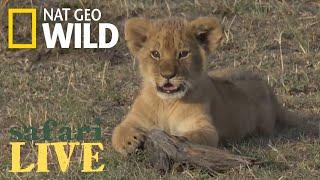 Safari Live - Day 39 | Nat Geo WILD