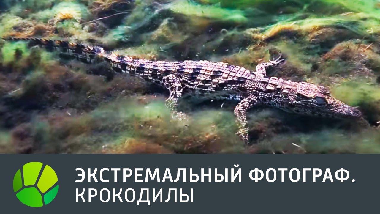 Крокодилы. Экстремальный фотограф | Живая Планета