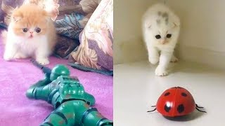 Cat Reaction to Playing Toy - Funny Cat Toy Reaction Compilation
