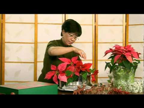 Giáng Sinh An Bình