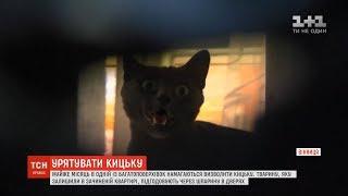 Майже місяць у Вінниці намагаються врятувати кішку, яку зачинили саму у порожній квартирі
