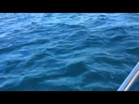 Shark surfaces in WA