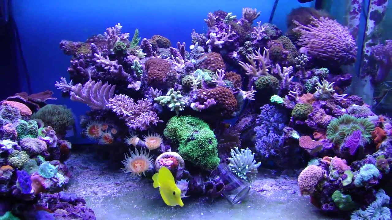 My SPS and LPS reef tank - YouTube 10 Gallon Fish Tank Ideas