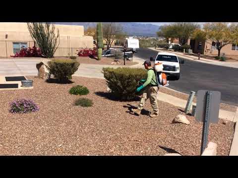 Pest control in Tucson- Mosquito Squad