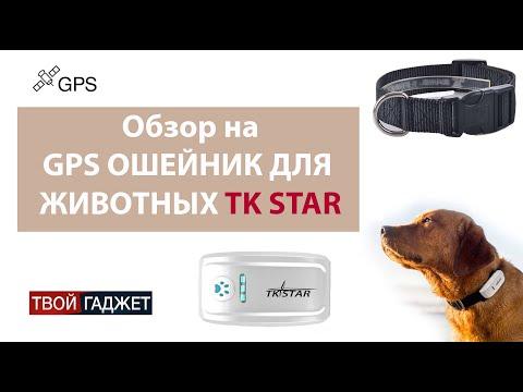 Обзор GPS ошейник для собак и кошек TK Star