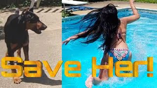 Will Doberman Pinscher Save Owner from Drowning?