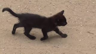 давно потеряный котенок Лафит
