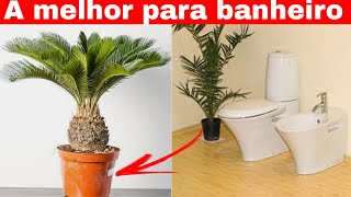 A melhor Planta para seu Banheiro
