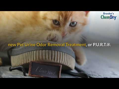 Pet Urine Carpet Cleaners | How To Get Pet Urine Out Of Carpet